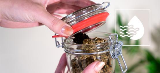 Das Lüften Von Nuggets Beim Aushärten Von Cannabis