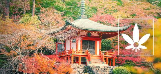 Hokkaido Hanf: Eine Seltene Japanische Landrasse