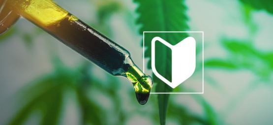 3 Cannabis-konzentrate, Die Sich Perfekt Für Neulinge Eignen