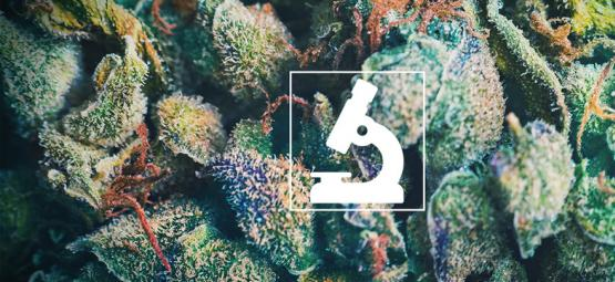 Die Nutzen Eines Mikroskops Für Cannabisanbauer Und -Raucher