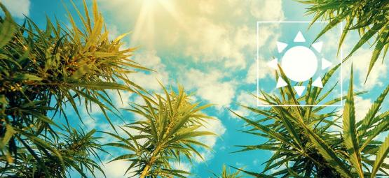 Wie Viel Sonnenlicht Benötigen Cannabispflanzen Im Freien?