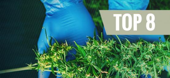 8 Ernte-Hilfsmittel, Die Jeder Cannabis-Grower Braucht