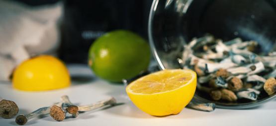 Zubereitung Eines Lemon Teks Für Schnellere Mushroom-/Trüffel-Trips