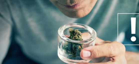 Wie Man Verunreinigungen Von Cannabisblüten Erkennt
