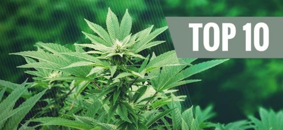 Top 10 Einsatzmöglichkeiten Für Hanf: Eine revolutionäre Pflanze | Teil 1