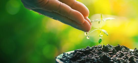 Komposttee: Der Natürliche Booster Für Deine Cannabispflanzen