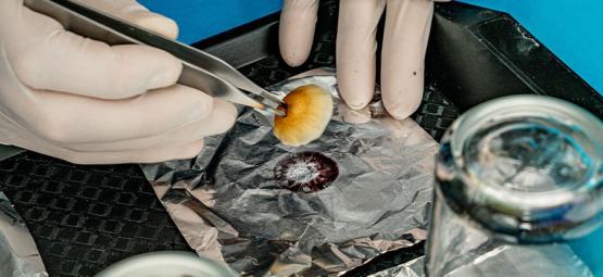 Wie Man Saubere Sporenabdrücke Nimmt