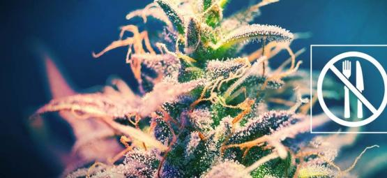 Cannabis Sorten Von Denen Man Keinen Heißhunger Bekommt?
