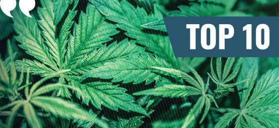 Unsere Top 10 der besten Marihuana Zitate aller Zeiten
