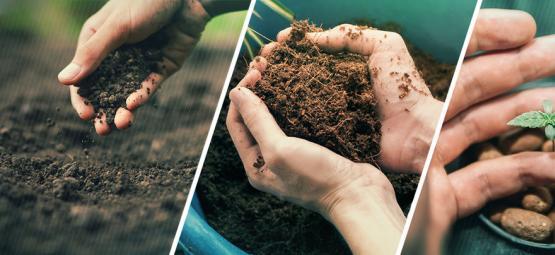 Sollte Man Cannabis In Erde, Kokos Oder Hydrokultur Anbauen?