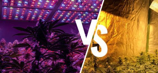 Leuchtmittel: LED vs. HPS