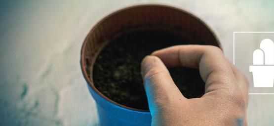 Aufzucht von Kakteen aus Samen & Ablegern