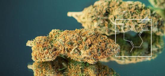 Terpenschub: Wie man richtig heftig müffelndes Marihuana aufzieht