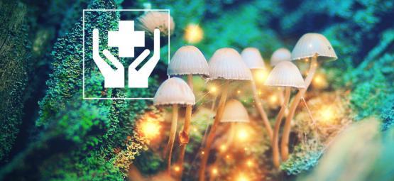 5 Überraschende Nutzen Von Zauberpilzen