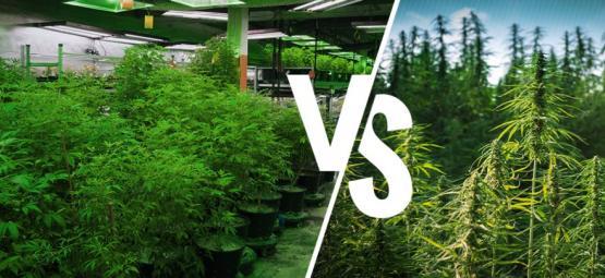 Anbau Im Grow Room Im Vergleich Zu Im Freien: Die Vor- Und Nachteile