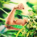 Die Top 5 Der Stärksten Und Wirksamsten Cannabis Sorten