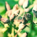 Wie Man Seinen Eigenen Tabak Aus Samen Aufzieht