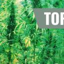 Top 7 Besten Cannabissorten Und Ihre Schöpfer