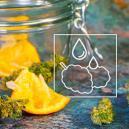 Wie Du Dein Übertrockenes Marihuana Retten Kannst