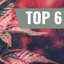 Top 6 Loveable Cannabis Strains