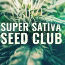 Super Sativa Seed Club Ist Zurück!