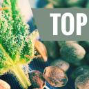 Unsere 10 beliebtesten Samenbanken