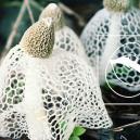 Seltener Pilz, Von Dem Angenommen Wird, daß Er Einen Sofortigen Orgasmus Auslöst