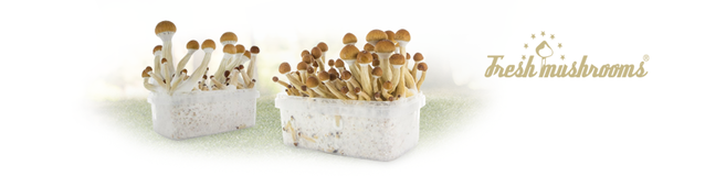 Kit per la Coltivazione Fresh Mushrooms