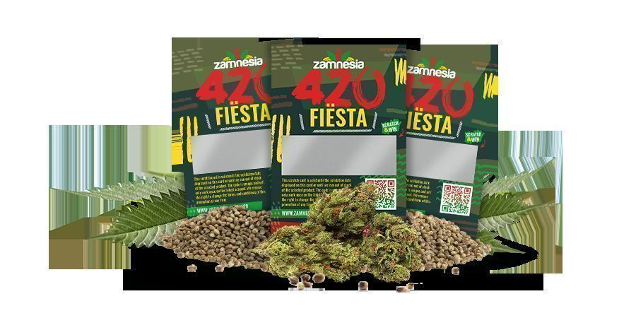 Landingspage image Cards 420 Fiesta 900x450
