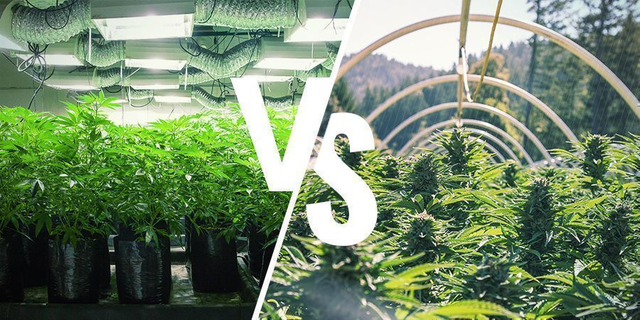 What's the Difference Between an Indoor and Outdoor Grow Setup?