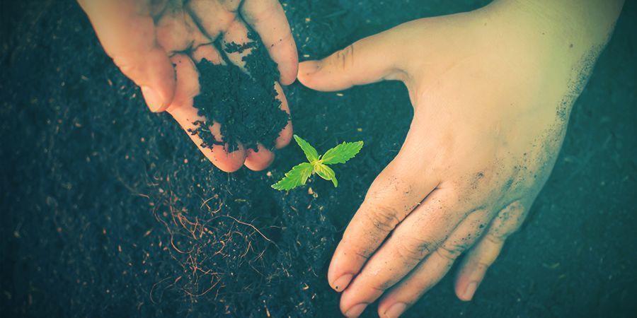 HOW TO GROW ORGANIC CANNABIS: PREPARING YOUR SOIL