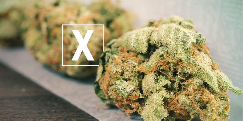 Is Skunk Cannabis Bad?