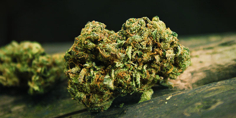 What Is Skunk?