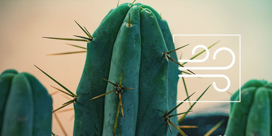 Bolivian Torch: The Psychoactive Cactus Of The Four Winds