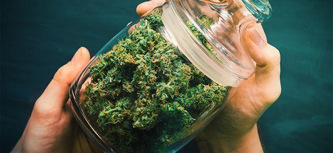 Grind Cannabis: Shake It