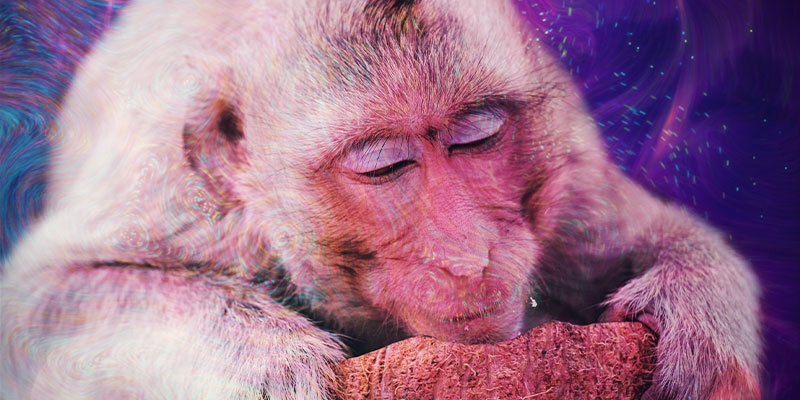 What Is the Stoned Ape Theory?