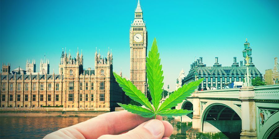 Growing Cannabis In The British Climate