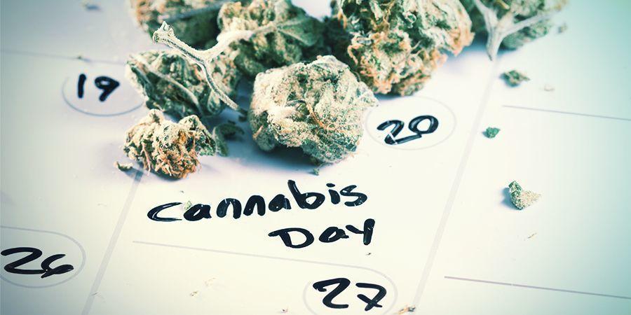 Wann Du Deine Cannabissamen Keimen Lassen Solltest