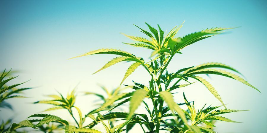 Climate Be Realistic With Your Expectations