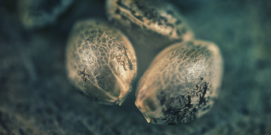 SATIVA, INDICA, HYBRID: HOW DO YOU WANT YOUR WEED TO MAKE YOU FEEL?