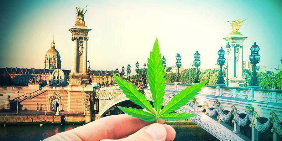 Die Auswahl Der Richtigen Cannabissorte Frankreich