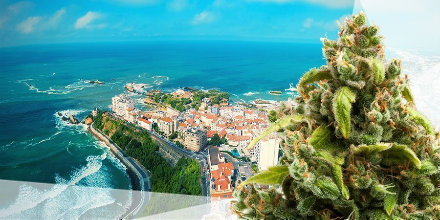 BEST CANNABIS SEEDS FOR THE ATLANTIC