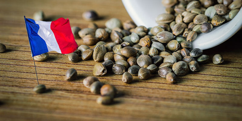 BEST CANNABIS SEEDS FOR SEMI-CONTINENTAL & THE MASSIFS
