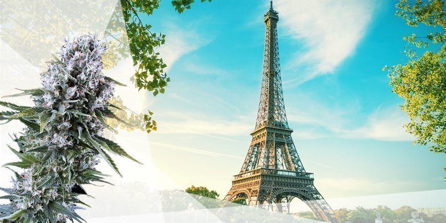 DIE ZWISCHENZONE Frankreich Cannabis