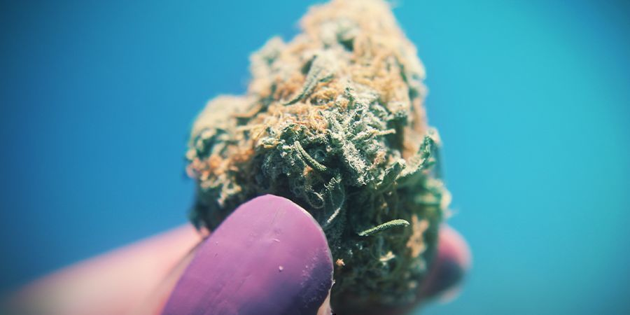 Cannabis The Stickier The Better
