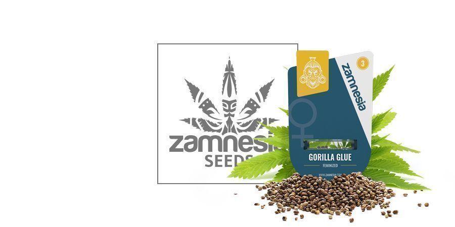 Gorilla Glue (Zamnesia Seeds)