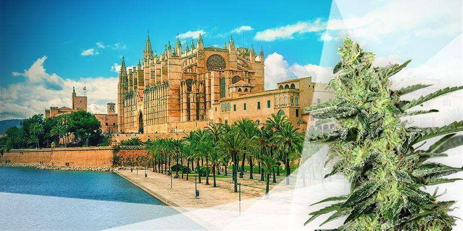 Cannabis Strains Balearic Islands Spain