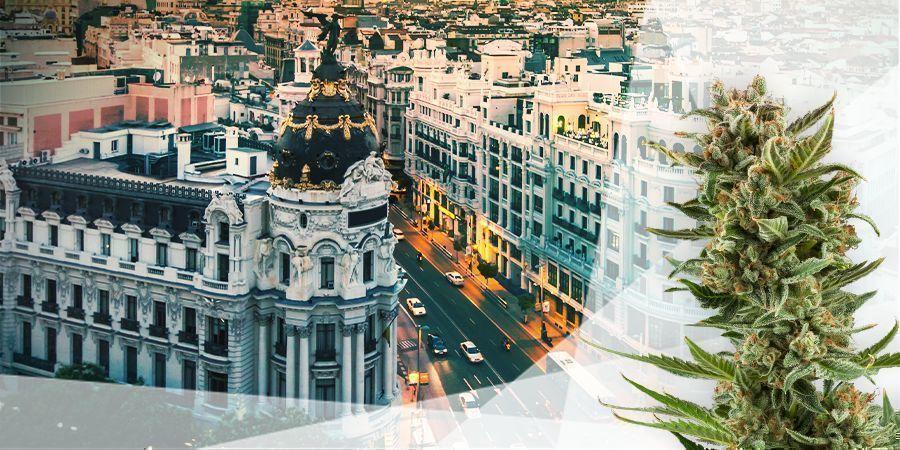 Cannabis Sorten Zentralspanien Und Mittelmeerraum