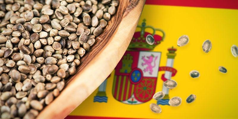 Cannabis Strains Central Spain