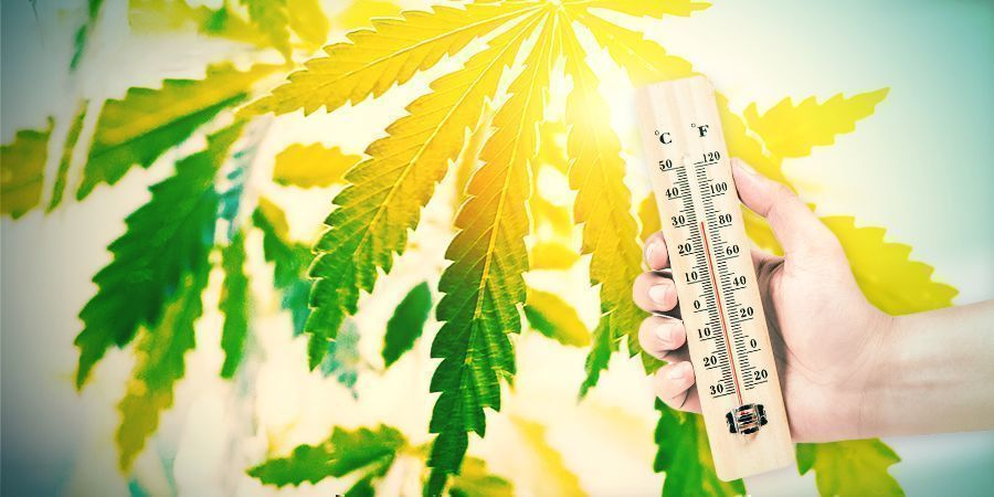 Growing Cannabis In The Spanish Climate